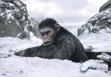 """The war for Planet of the  Apes' debe ir a los Óscar"""