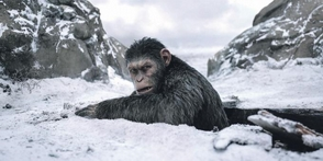 "Disney trabaja en una nueva cinta de la saga ""The Planet of the Apes"""