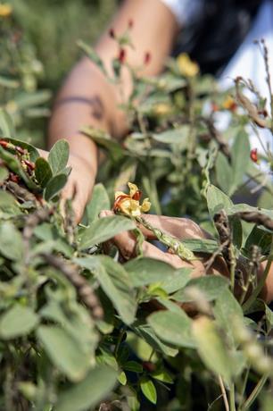Economía naranja y su impacto en la gastronomía dominicana